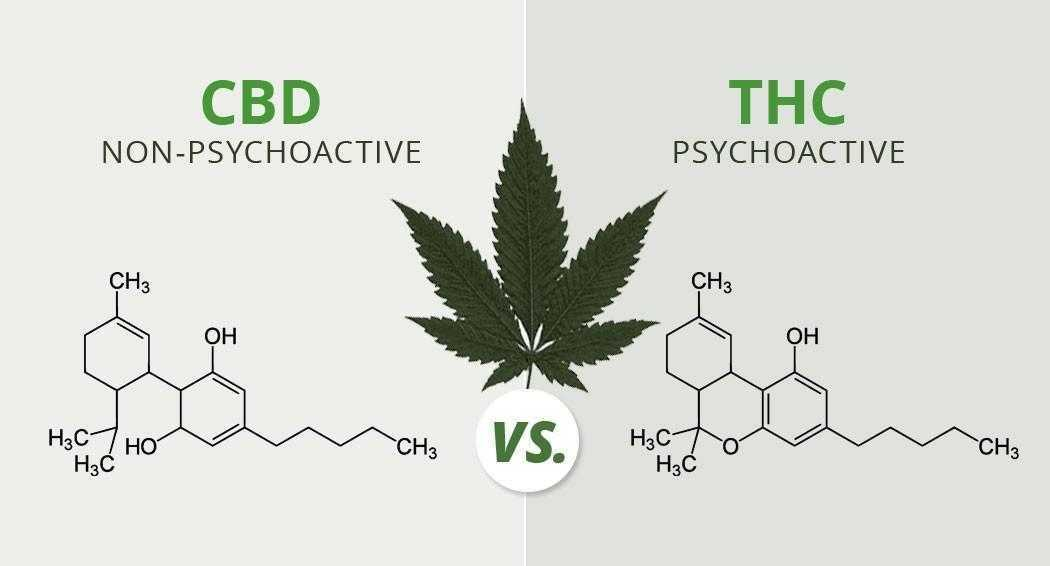 CBD vs. THC: Vergleich & Unterschiede zwischen diesen Molekülen