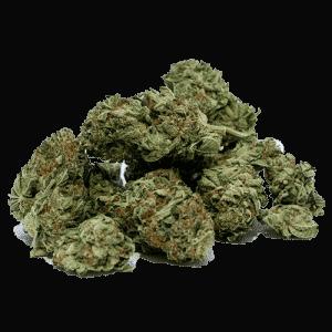 Les fleurs de cannabis séchées 1