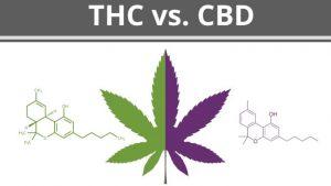 Točni postoci i omjer CBD / THC u cvijeću 2