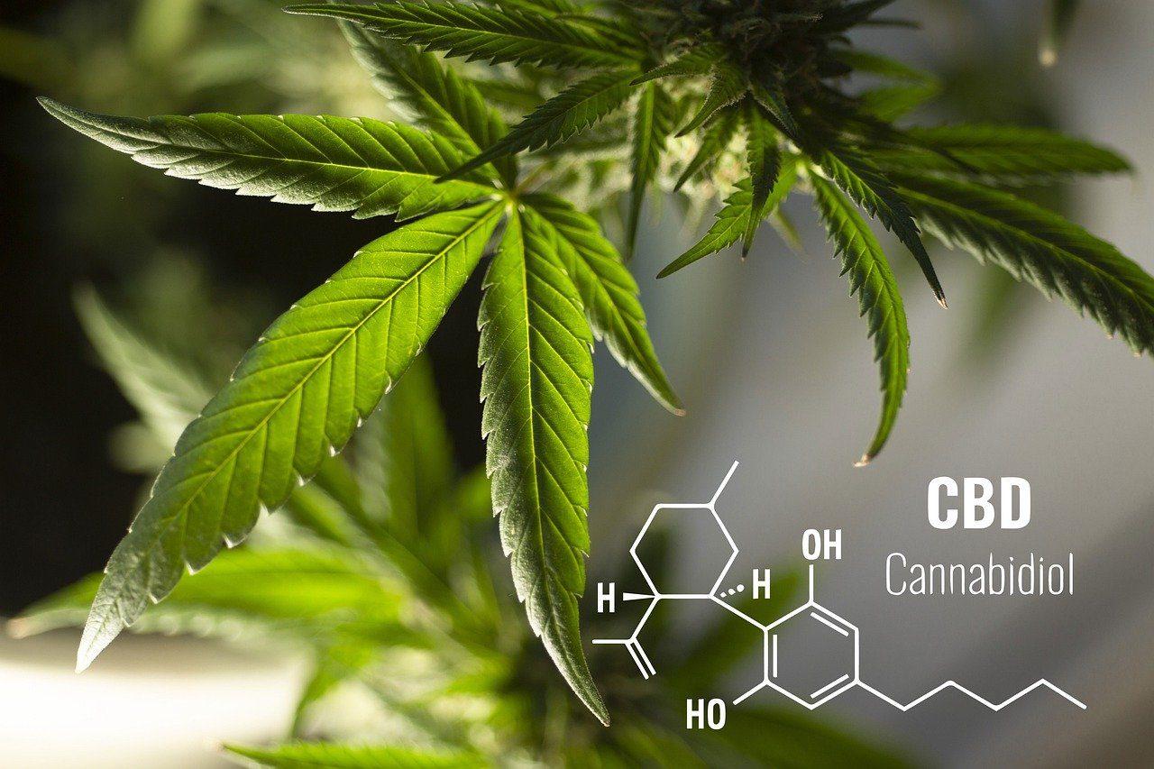 Comment consommer le cannabidiol (CBD) sans courir de risques?