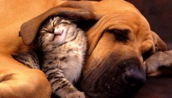 Info sur le CBD pour animaux (chiens/chats)